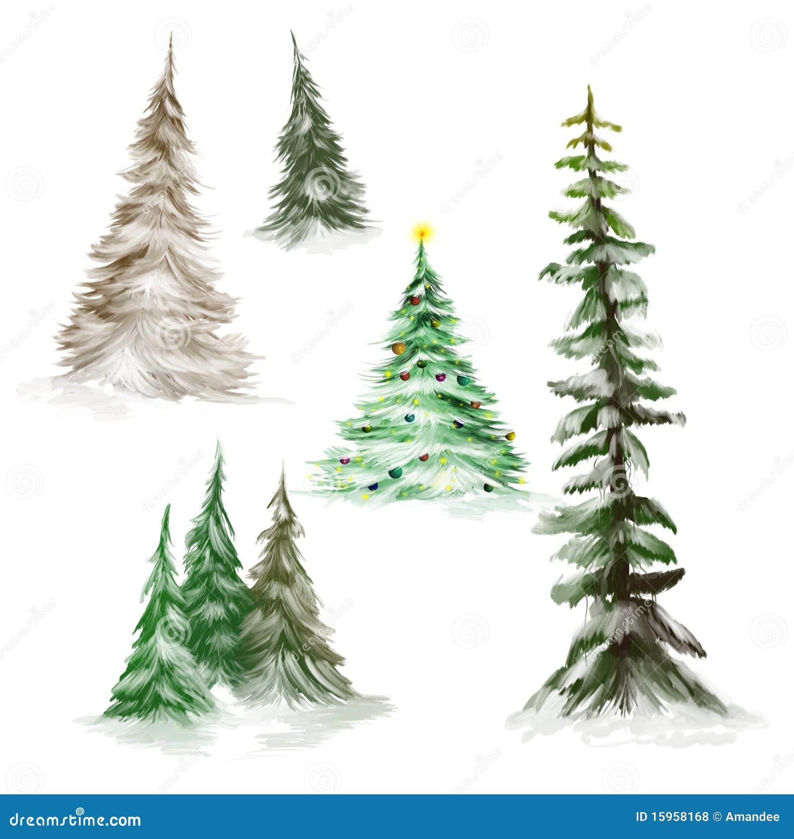 Vintage Pine Tree Illustration
