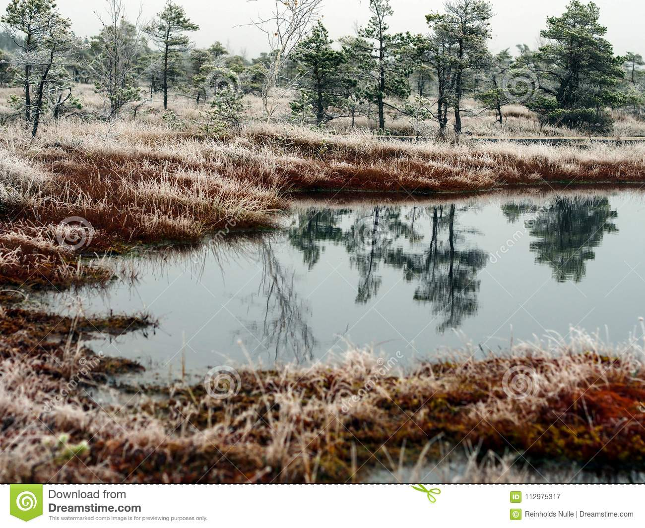 Pine Trees in Field of Kemeri moor in Latvia with a Pond in a Foreground