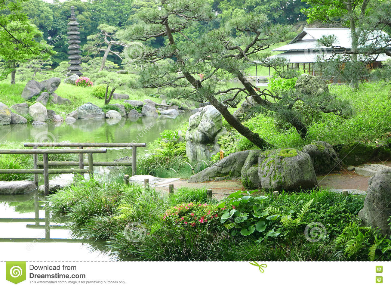 Pine Trees, Footpath, Bridge With Reflection And Pavilion Building In The  Japanese Zen Garden