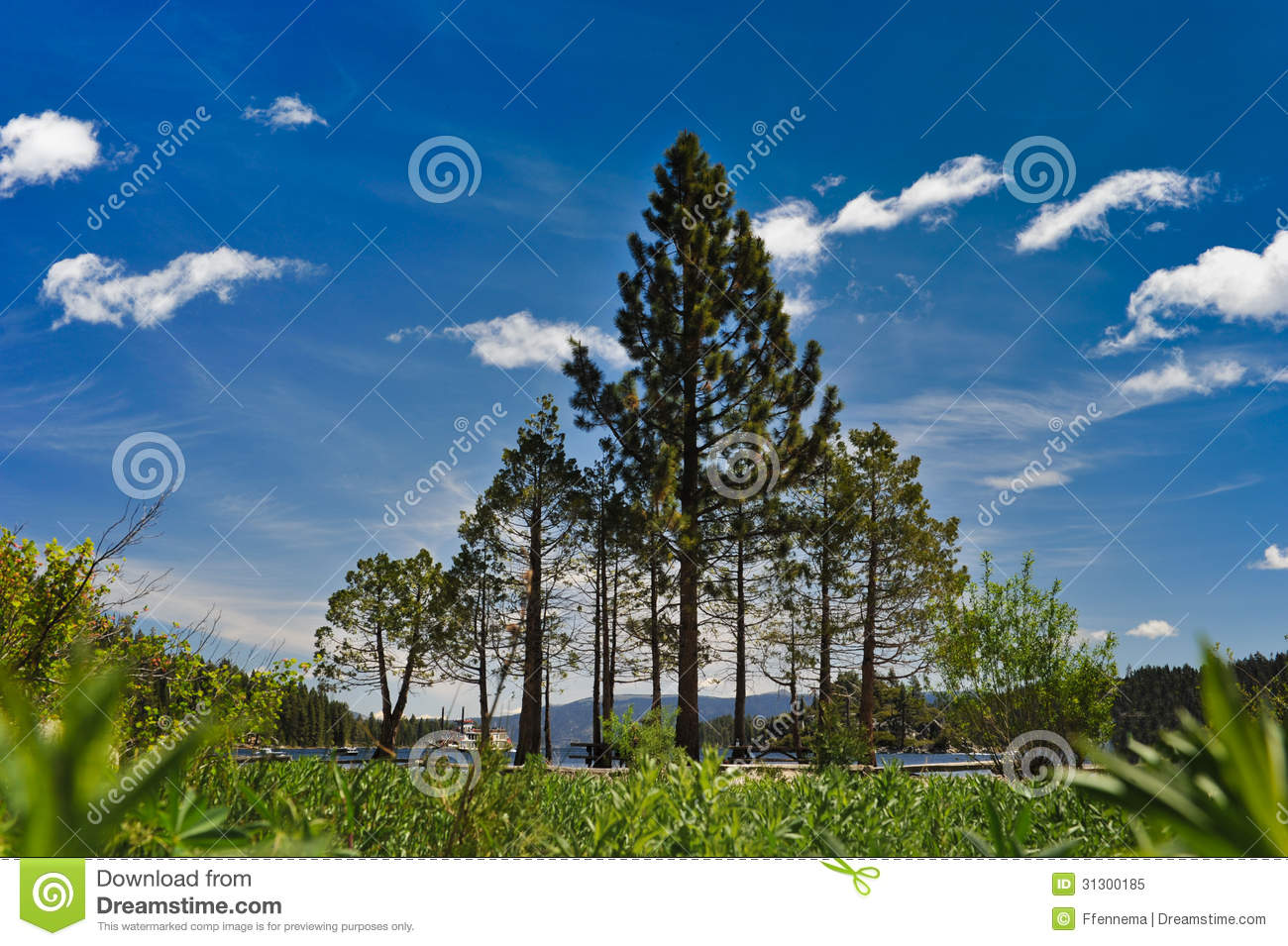 Pine Trees Form A Triangle By Lake Tahoe Royalty Free Stock Photo ...