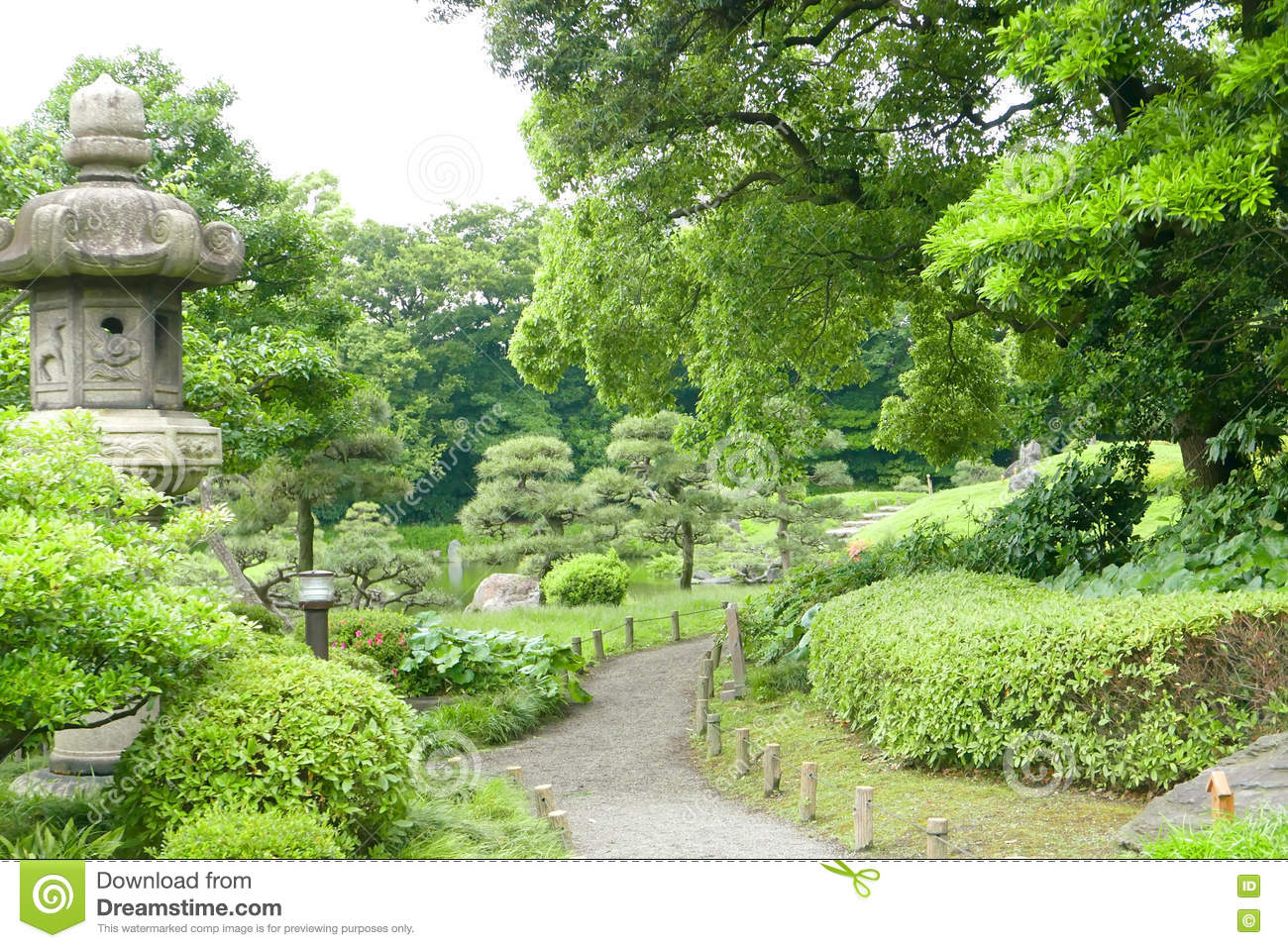Pine trees green plants footpath in japanese zen garden for Japanese garden plants and trees