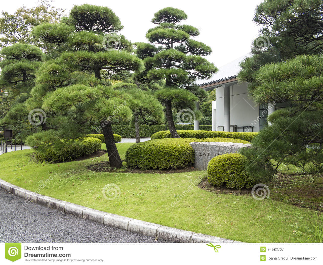 Pine trees in japanese garden royalty free stock for Garden trees types
