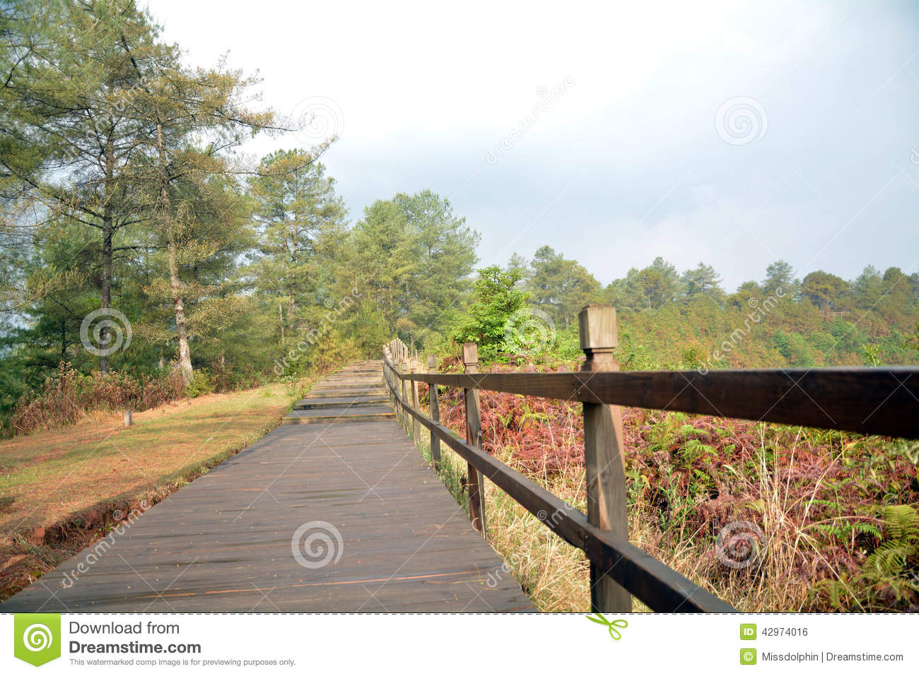 Download Pine Trees And Leaves With Wet Path In Tengchong Stock Photo - Image of fresh, down: 42974016