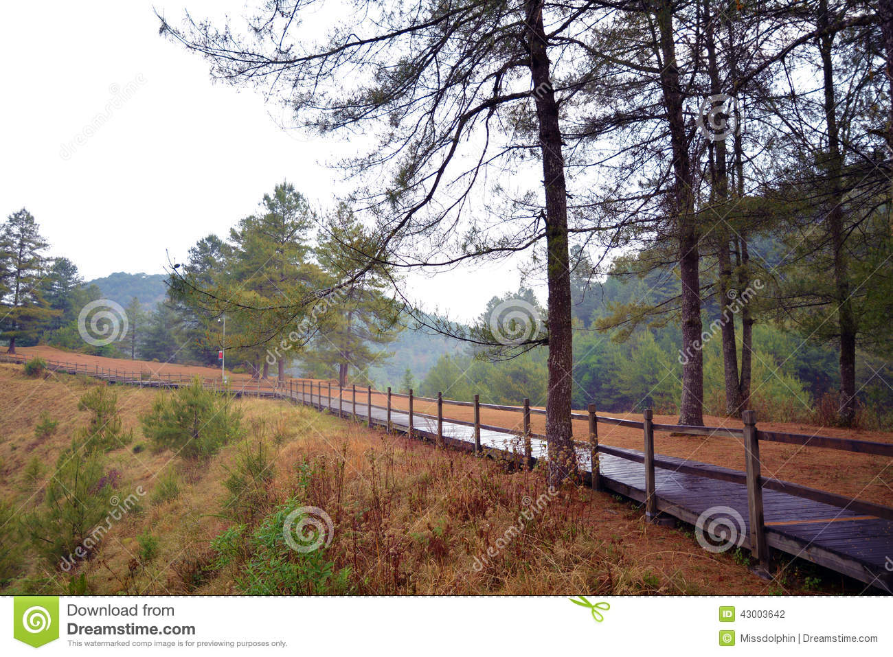 Pine trees and leaves with wet path