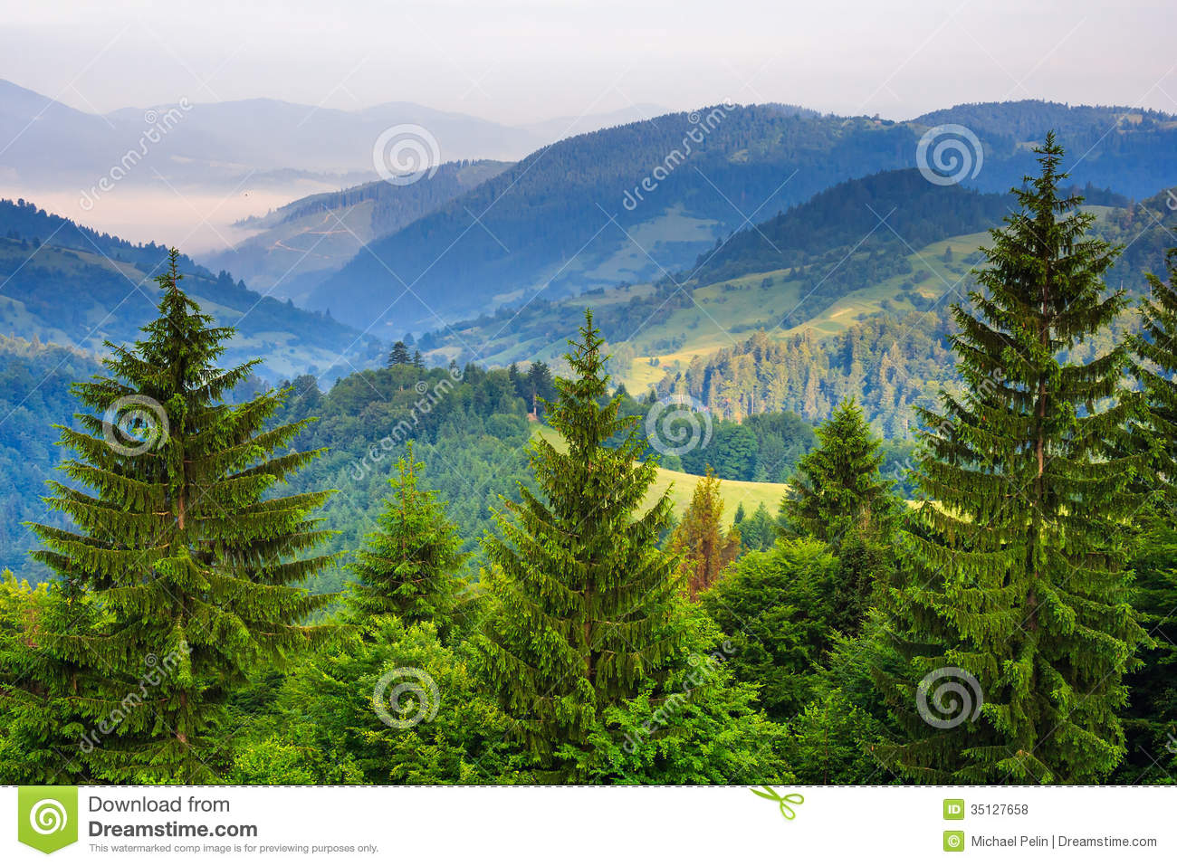 Pine Trees Near Valley In Mountains And Autumn Forest On Hillsid ...
