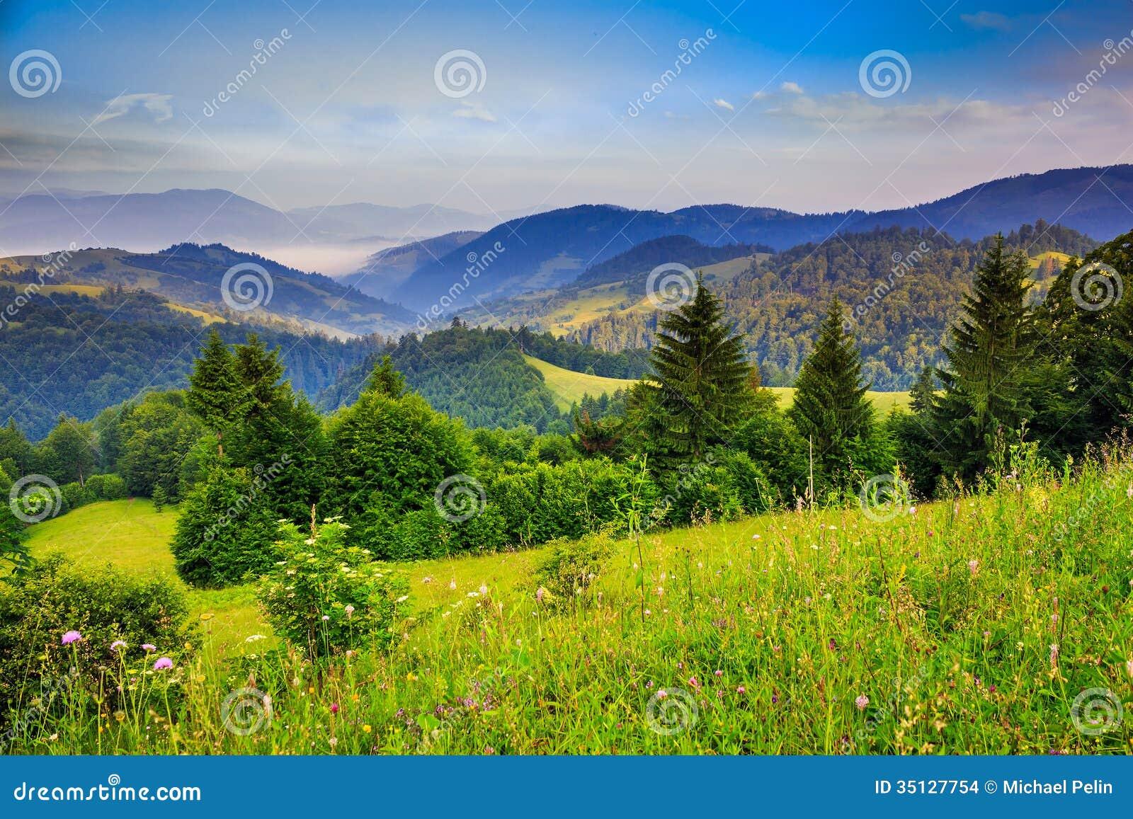 mountains pine trees - photo #16