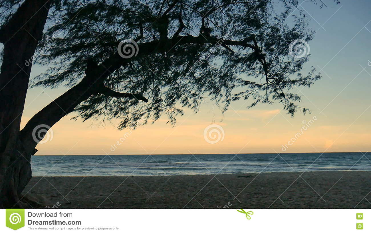 Pine Trees Over Beach, Pine Branch For Frame With Sea And Sky For ...