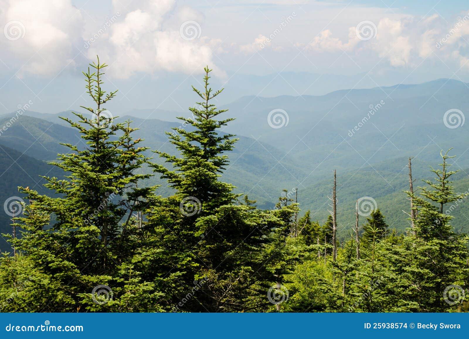 mountains pine trees - photo #13