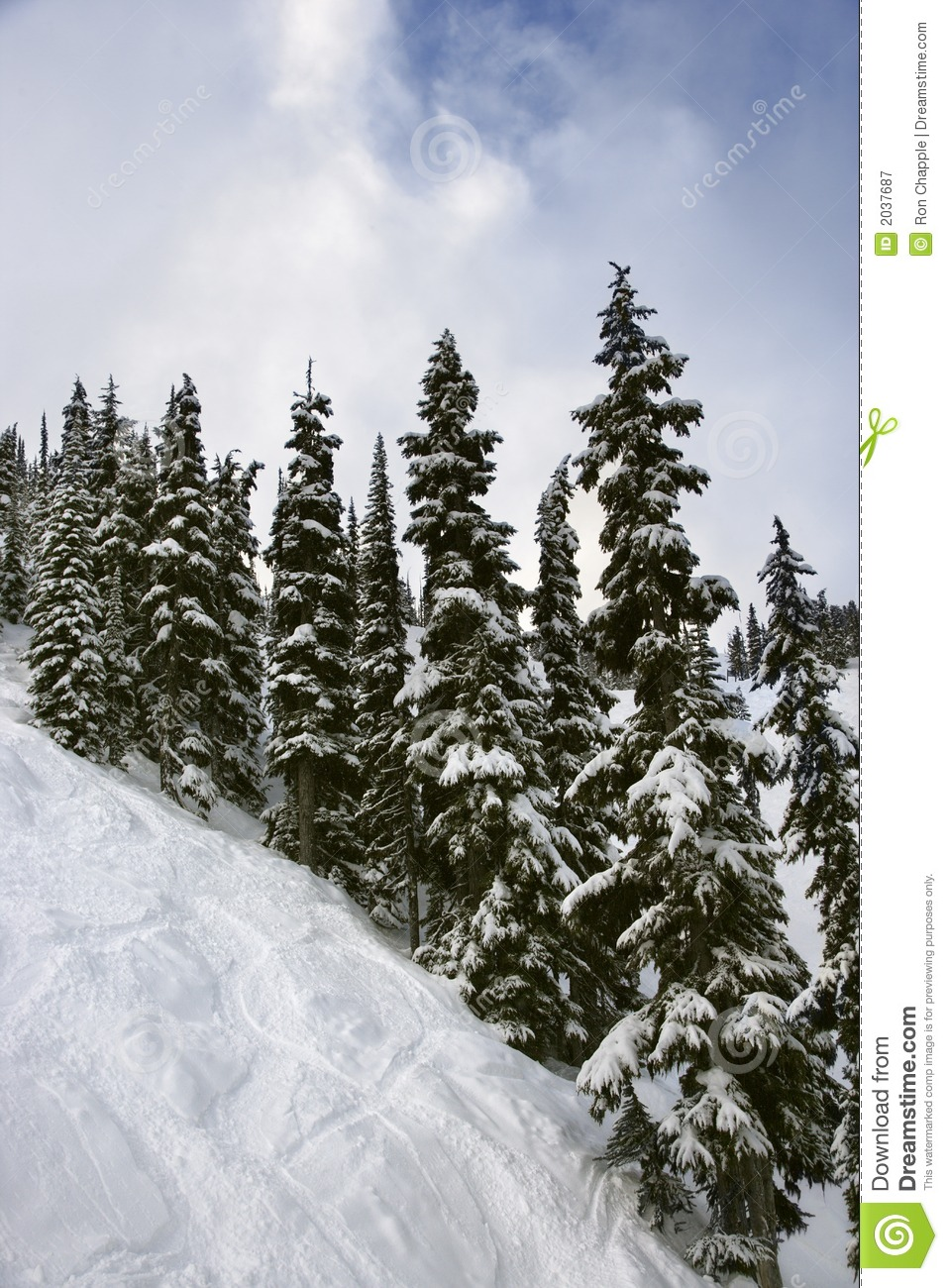 Snow Covered Pine Trees Clip Art Snow-covered pine trees on