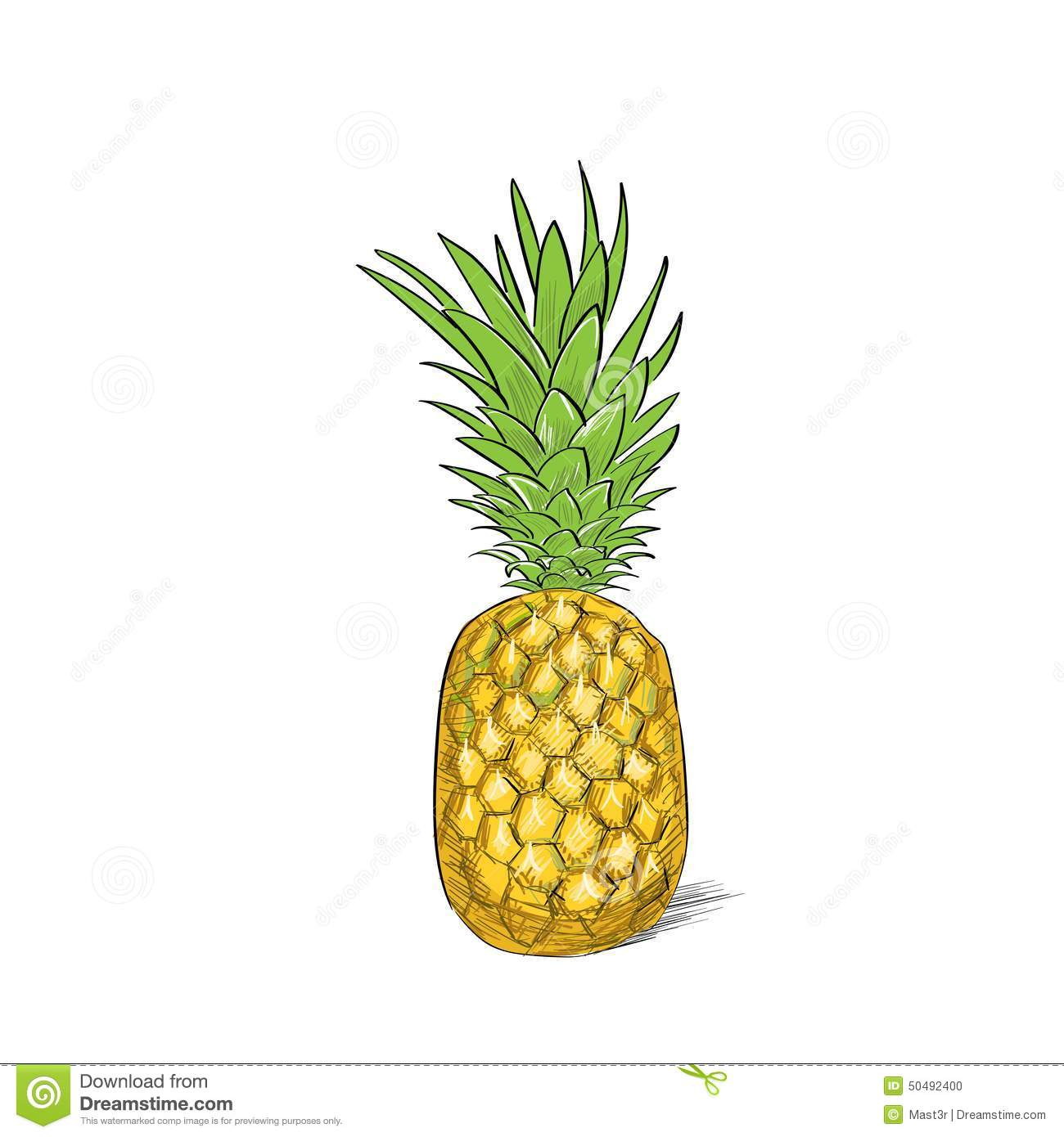 pineapple fruit color sketch draw isolated over stock vector