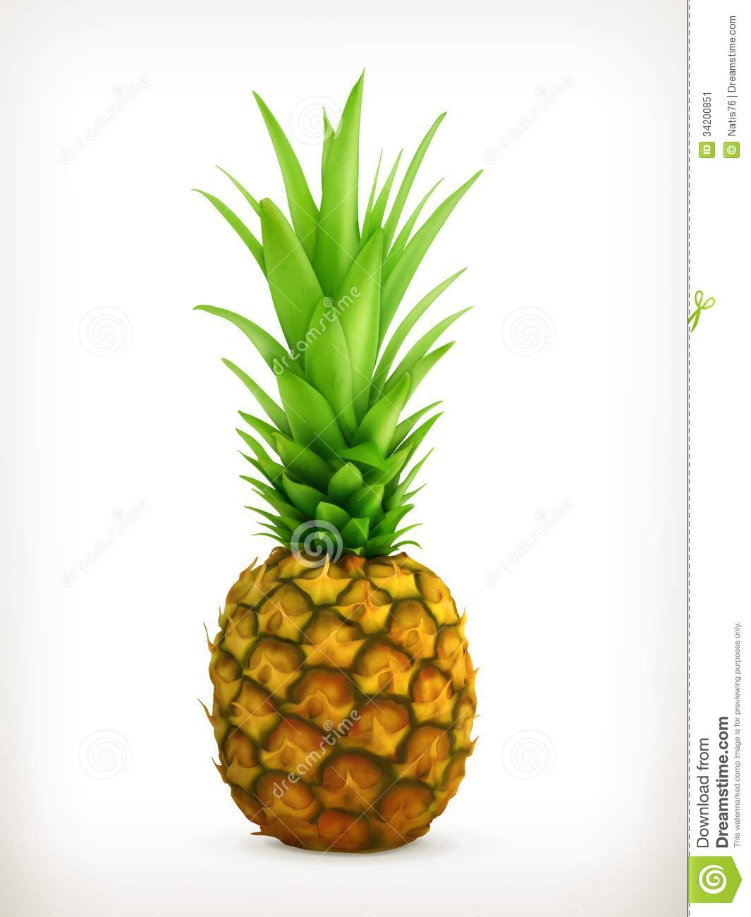 Pineapple, illustration on white background.