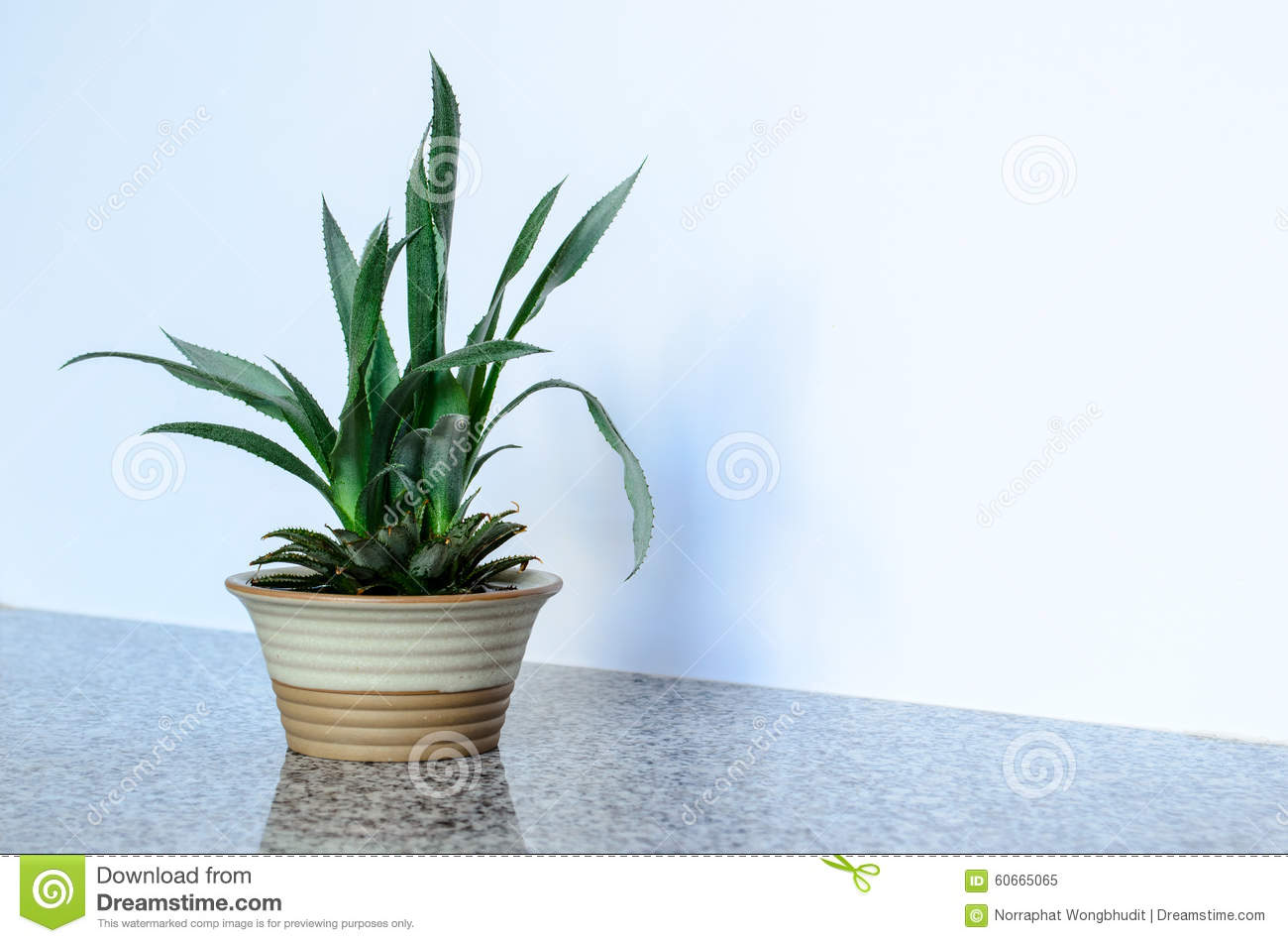 Pineapple plant stock image image of texture color for How to plant a pineapple top in a pot