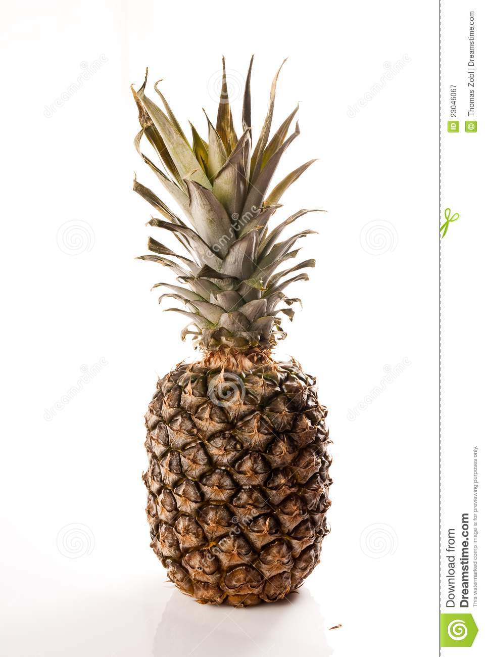 Pineapple on white royalty free stock photography image for Pineapple in the ground