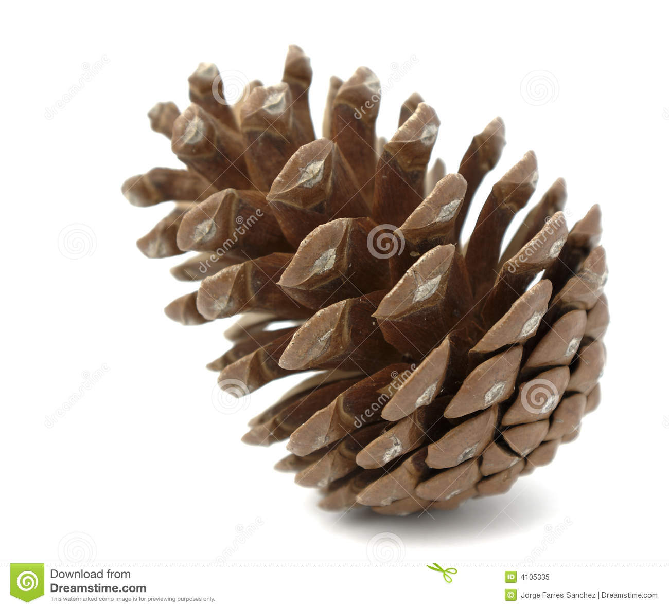 Pinecone Royalty Free Stock Photo - Image: 4105335