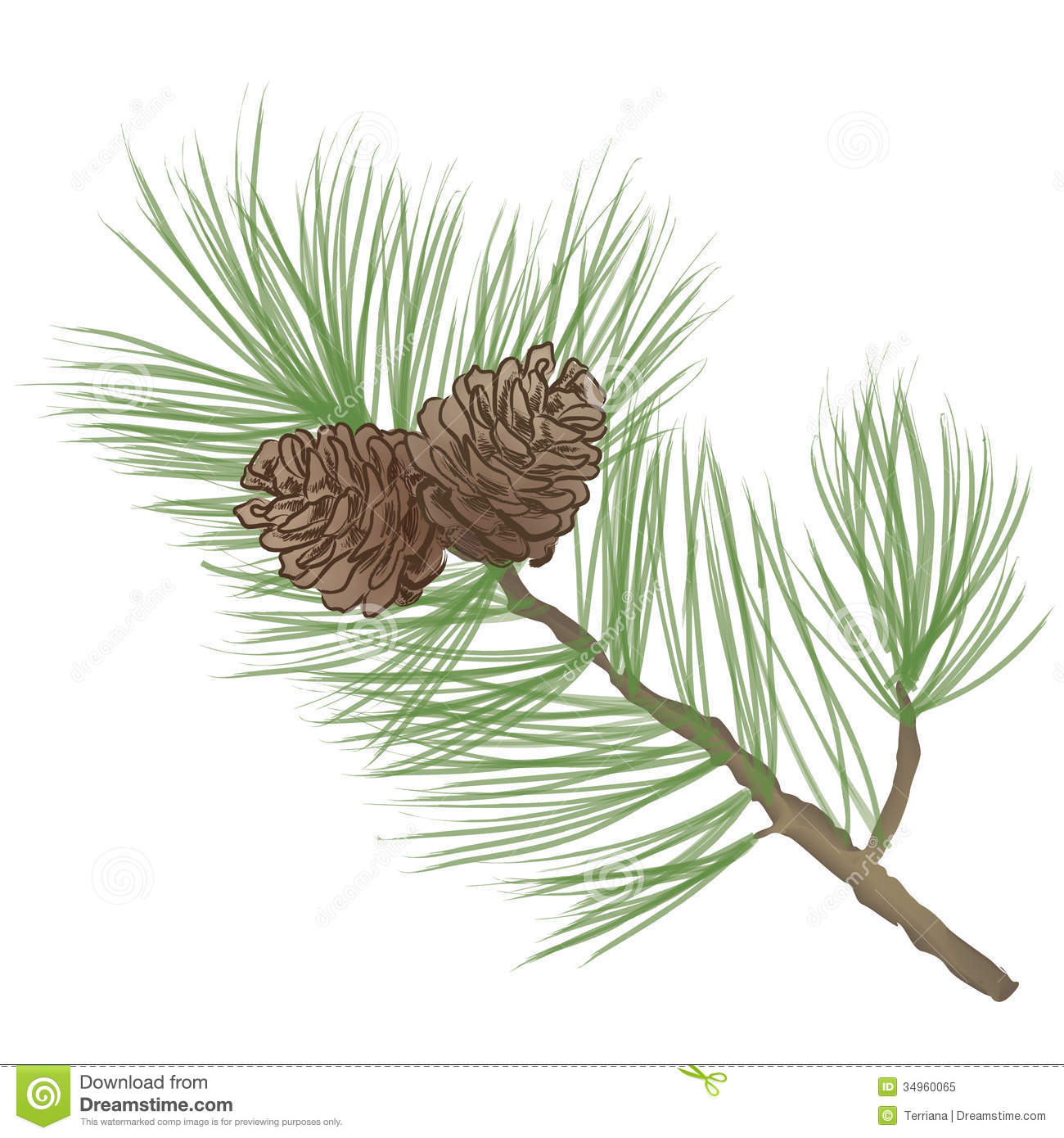 Pinecone branch Collection stock illustration. Illustration of ...