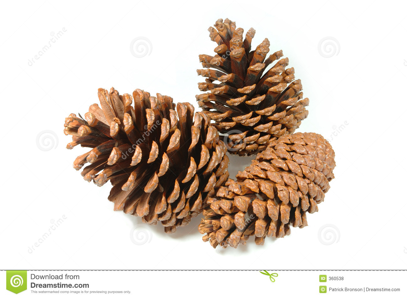Pinecone Cluster Stock Photo Image Of Closeup Brown