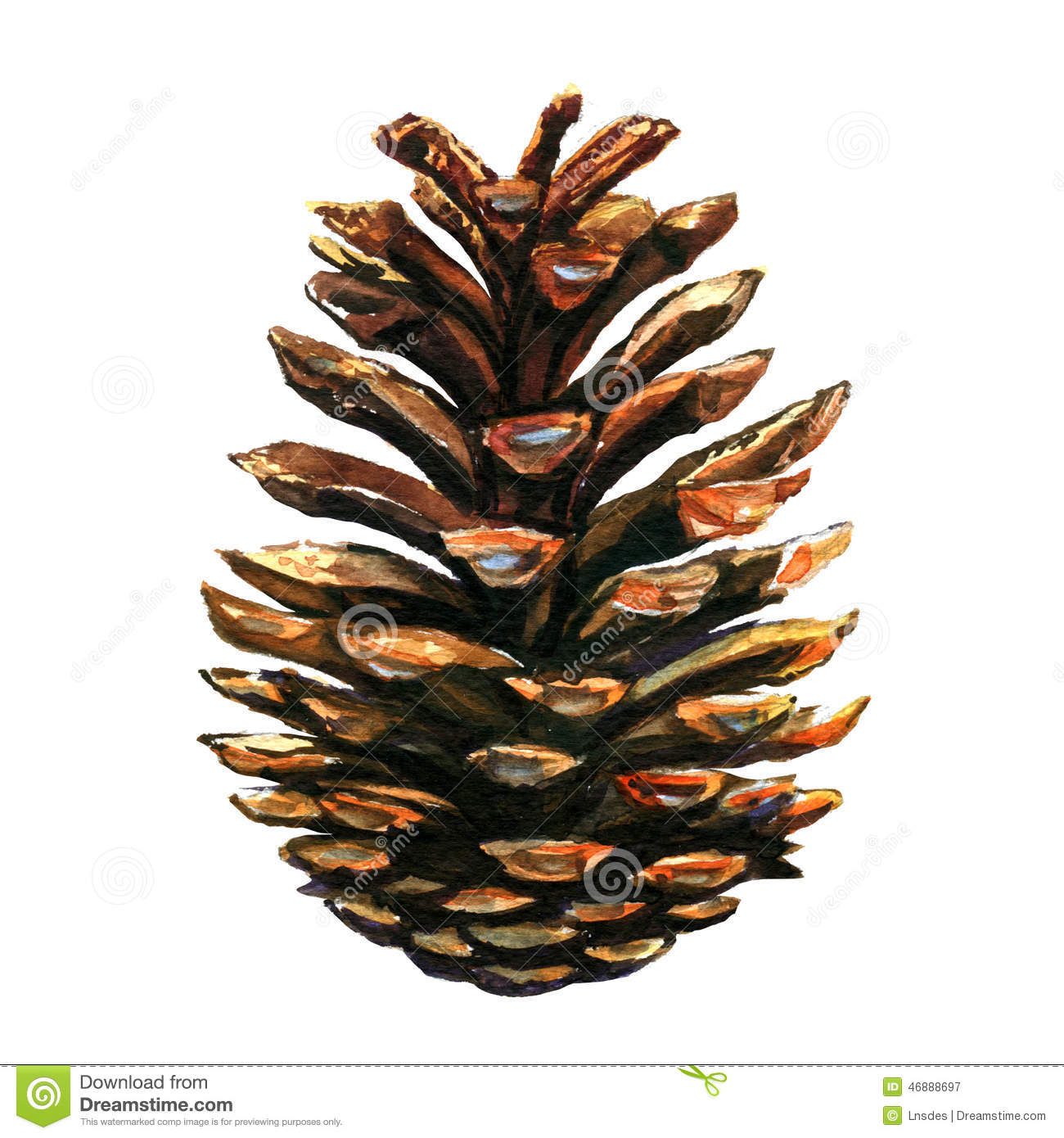 Pinecone on white background