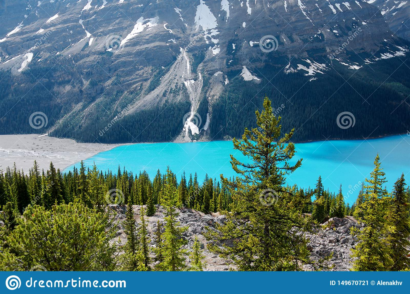 Pines and turquoise water of a mountain Peyto lake