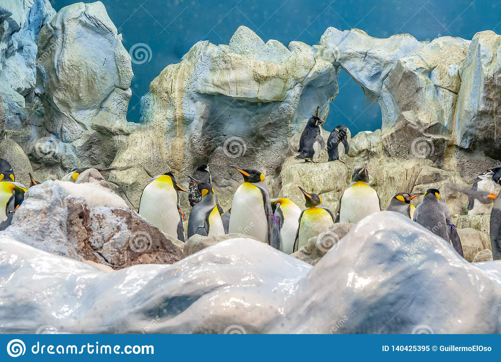 Pingüino grande en el parque zoológico en España