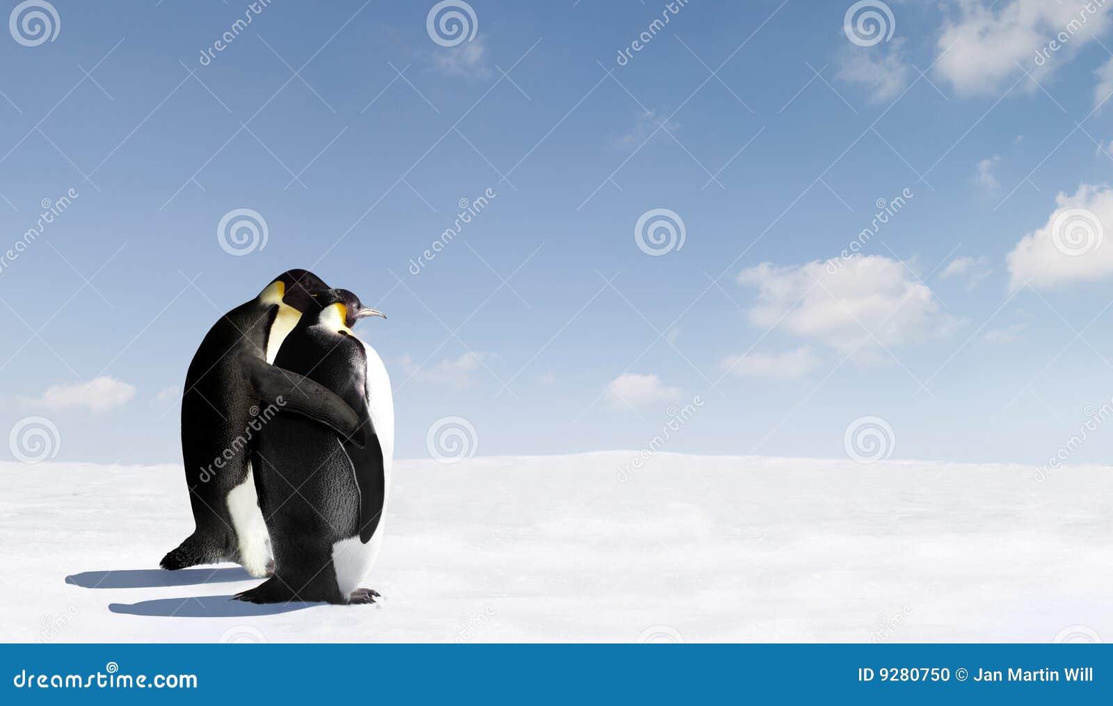 Pingüinos de emperador románticos