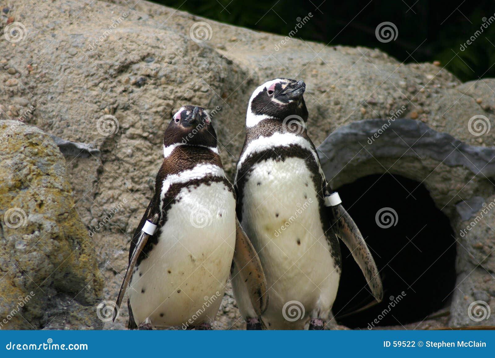 Pingüinos en la visualización