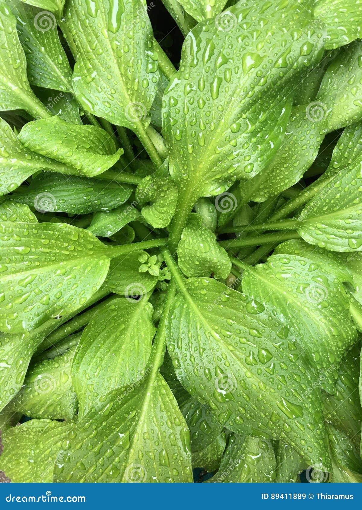 Pingos de chuva em uma planta