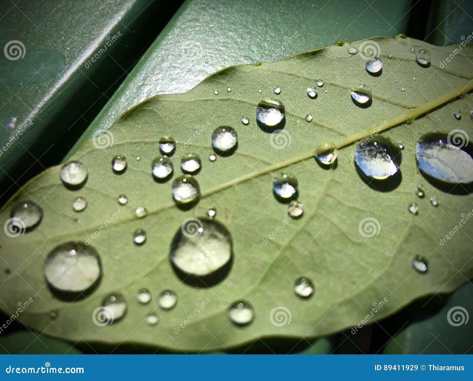 Pingos de chuva na folha