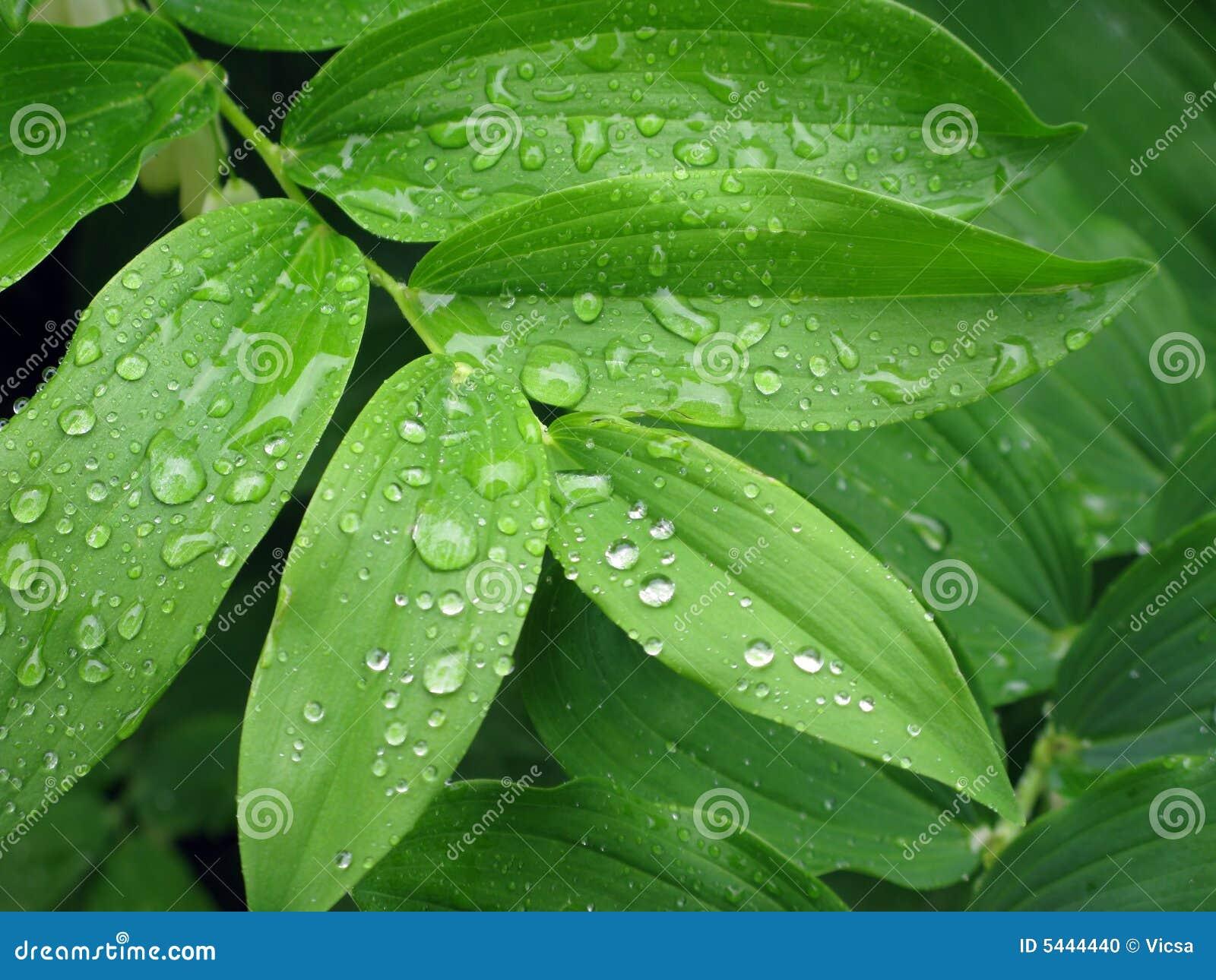Pingos de chuva nas folhas
