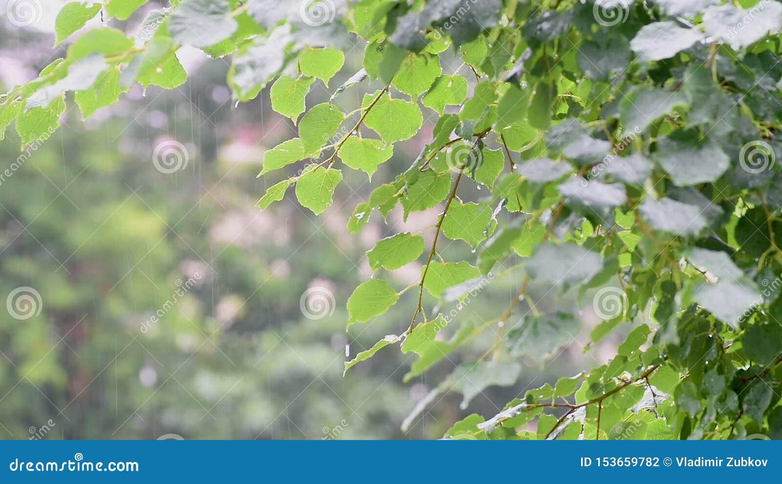 Pingos de chuva nas folhas video estoque