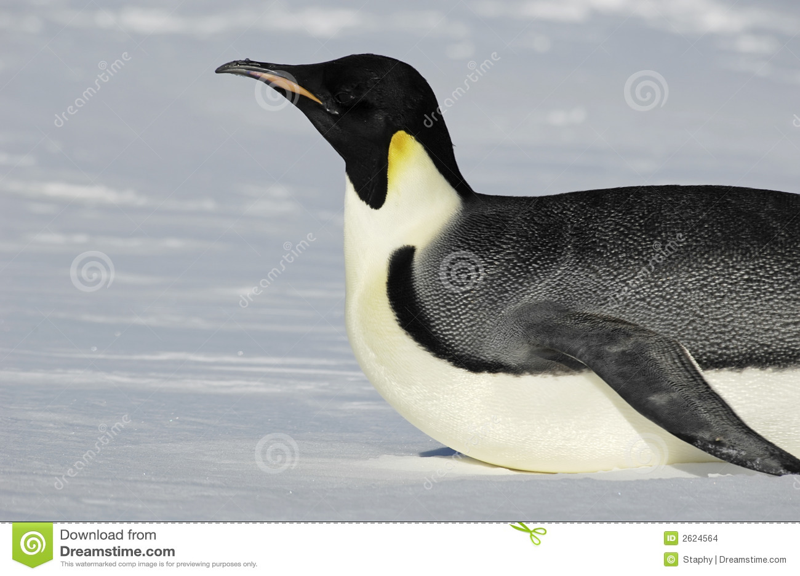 pingouin antarctique de glissement images stock image 2624564. Black Bedroom Furniture Sets. Home Design Ideas