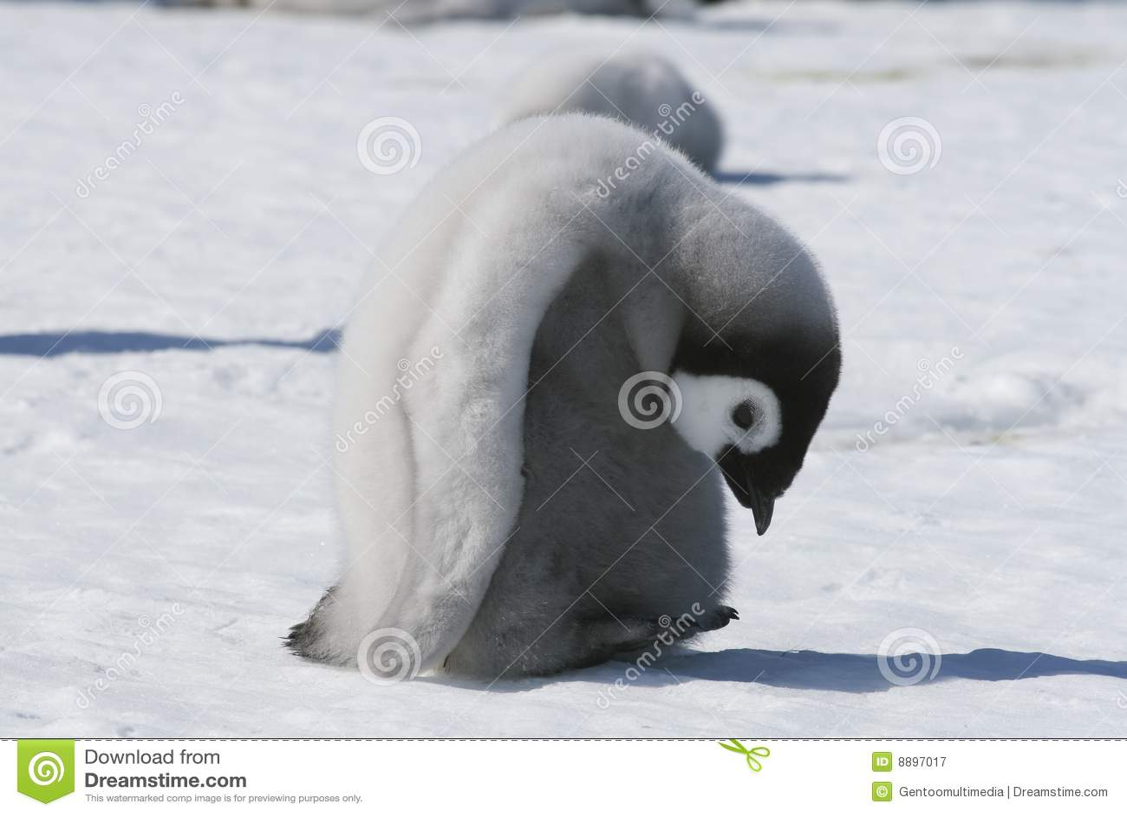 Pingouin d empereur de nana