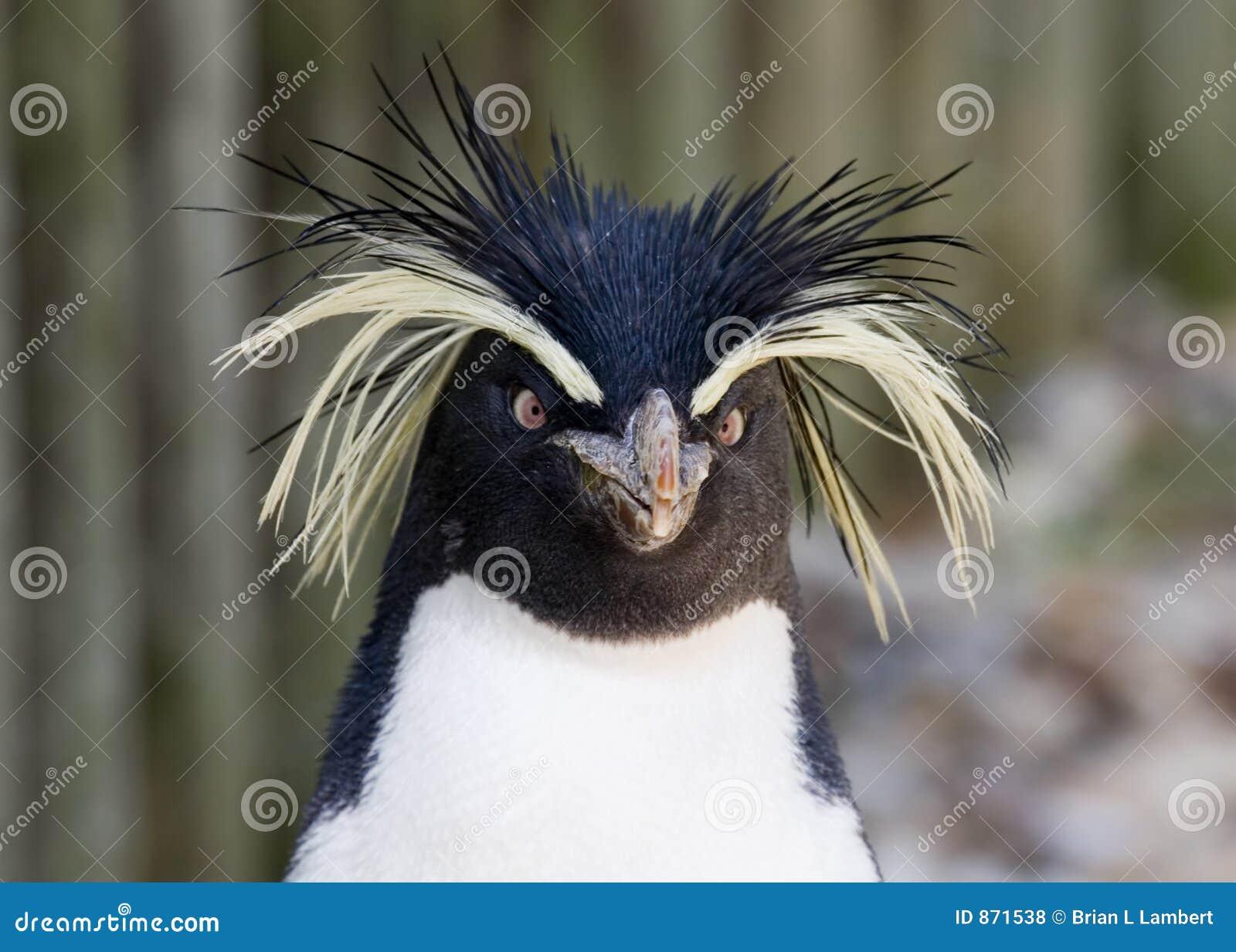pingouin de rockhopper photo stock image du antarctique 871538. Black Bedroom Furniture Sets. Home Design Ideas