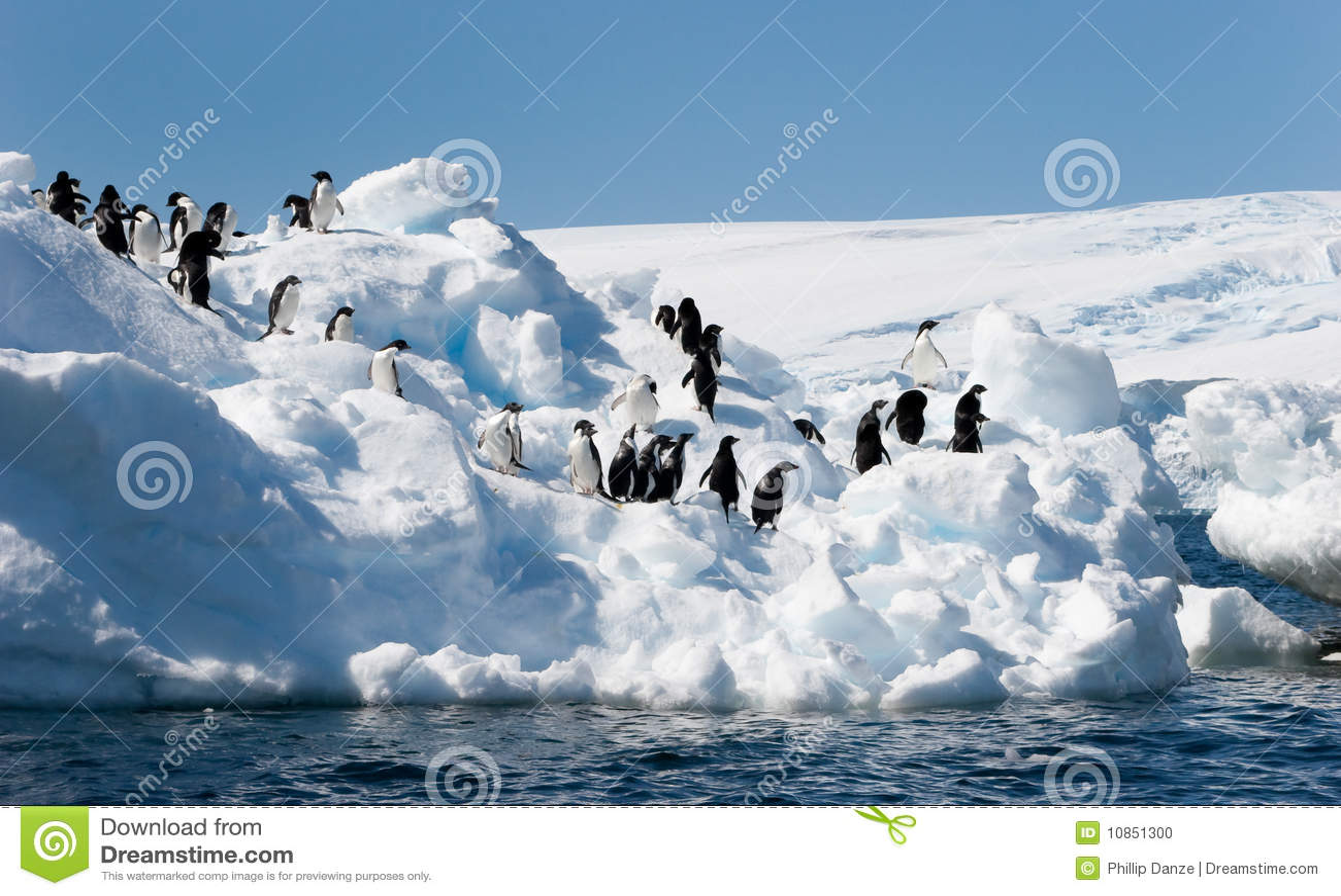 Pingouins d Adelie sur l iceberg
