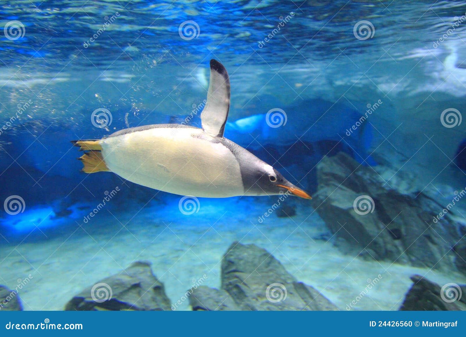Pinguïn onder waterclose-up