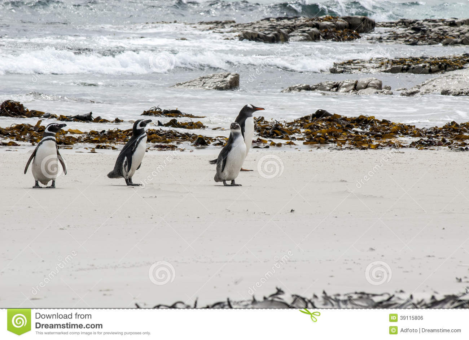Pinguïnen - het dromen van Magellan en Gentoo-