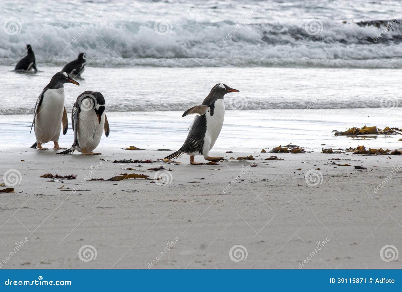 Pinguïnen - ik ben in zeven haasten!