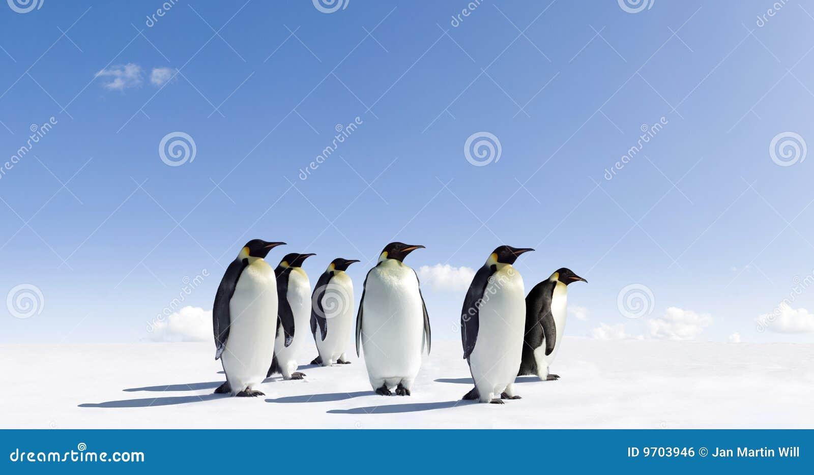 Pinguïnen op ijzig landschap