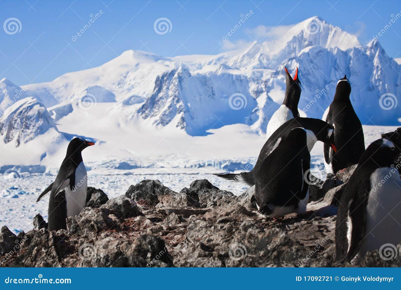 Pinguïnen op rots