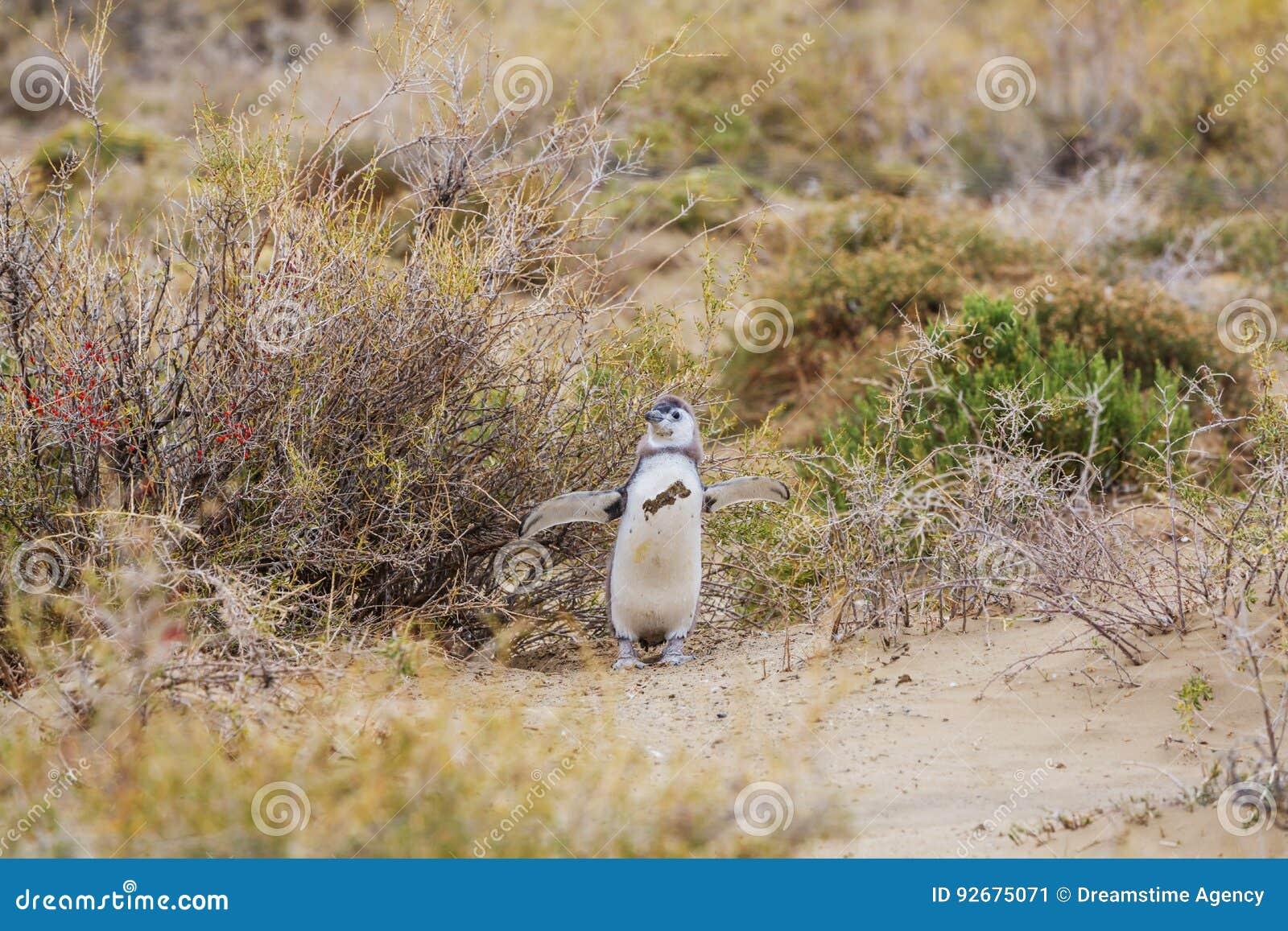 Pinguïnen in probleem