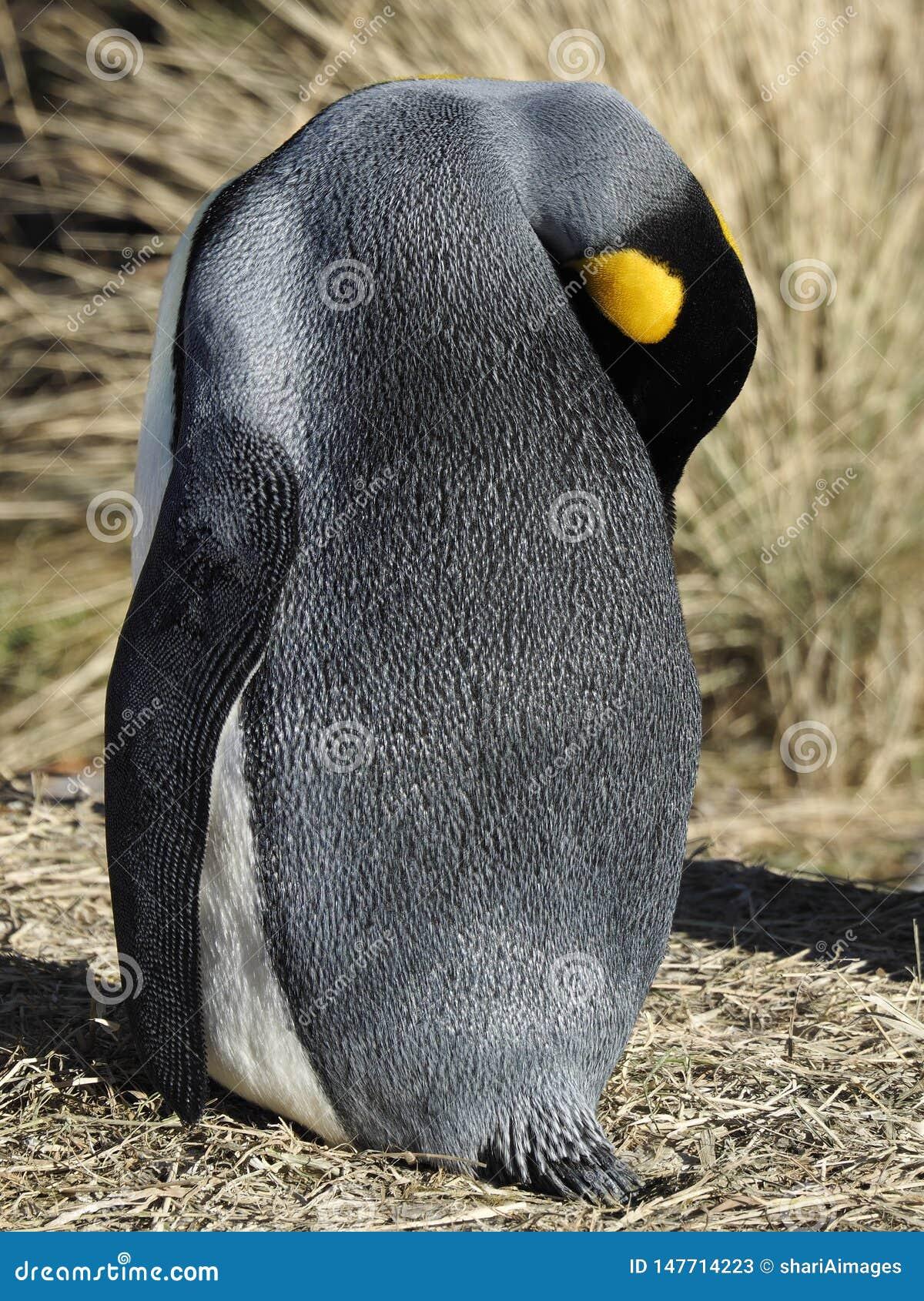 Pinguim de Emporer