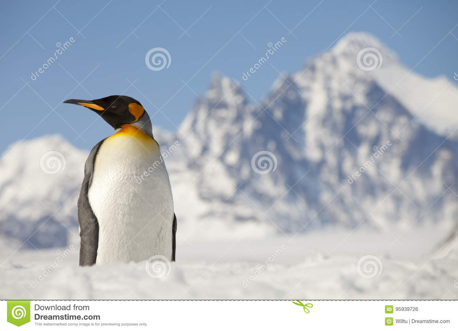 Pinguim de rei na frente dos picos de Georgia Island sul