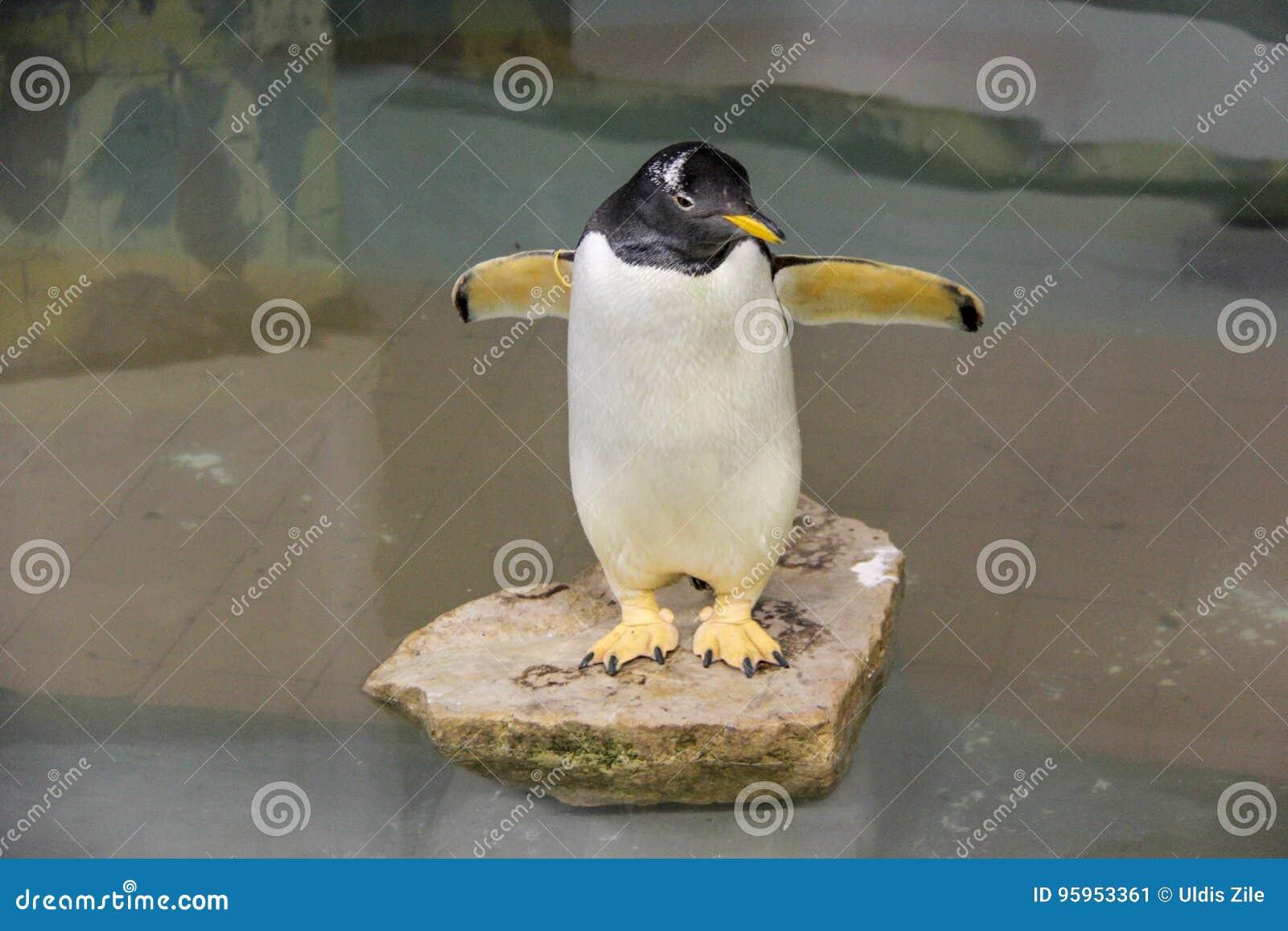 Pinguim feericamente pequeno
