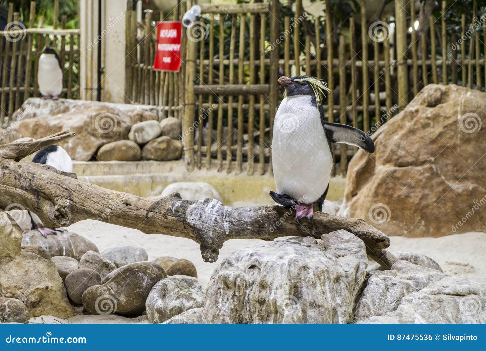 Pinguin Мадагаскара