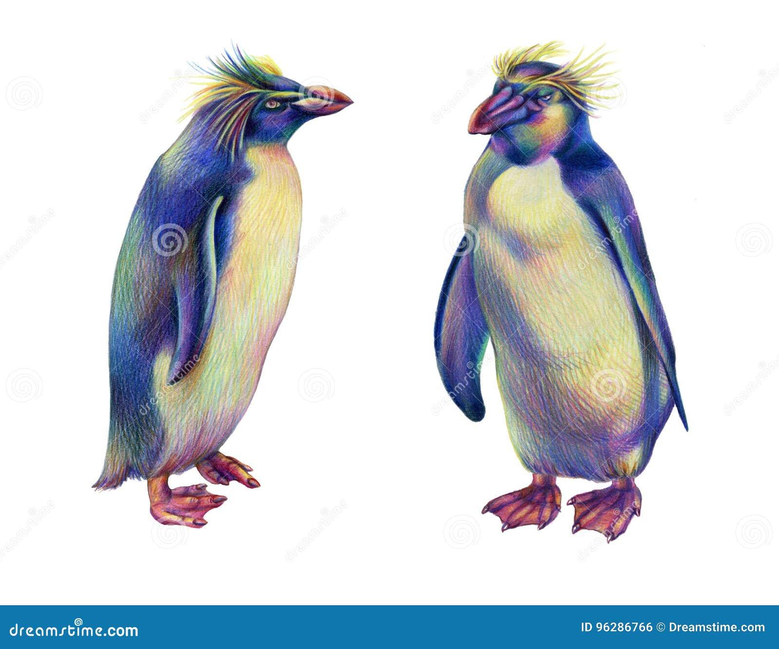 Pinguini colorati del rockhopper dell 39 arcobaleno del for Disegno pinguino colorato