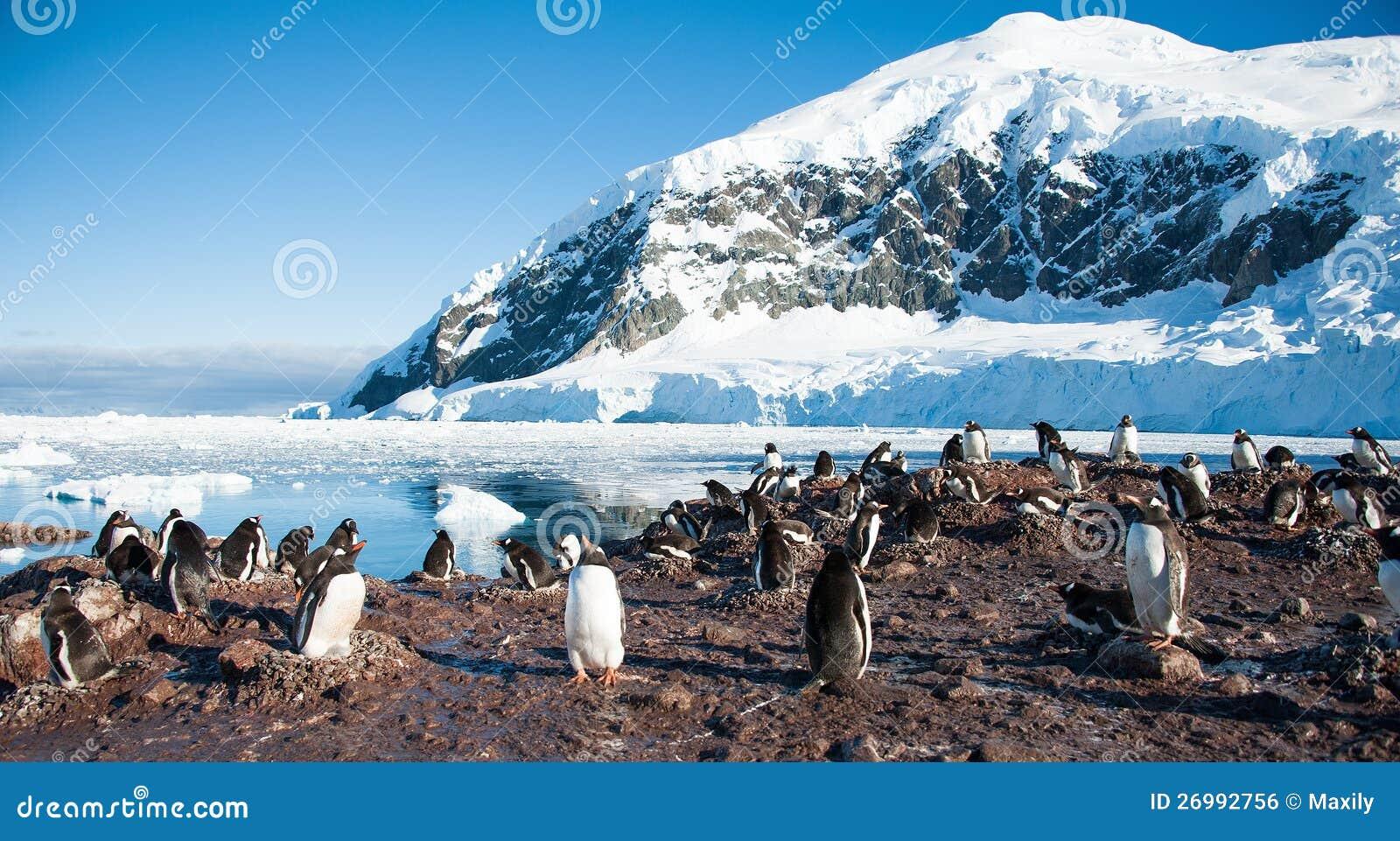 Pinguini del Adelie sulla spiaggia dell Antartide