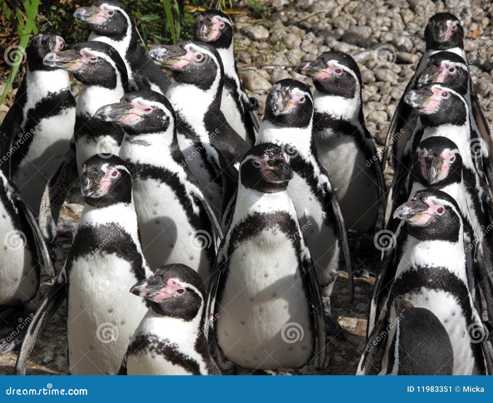Pinguini su sunbath