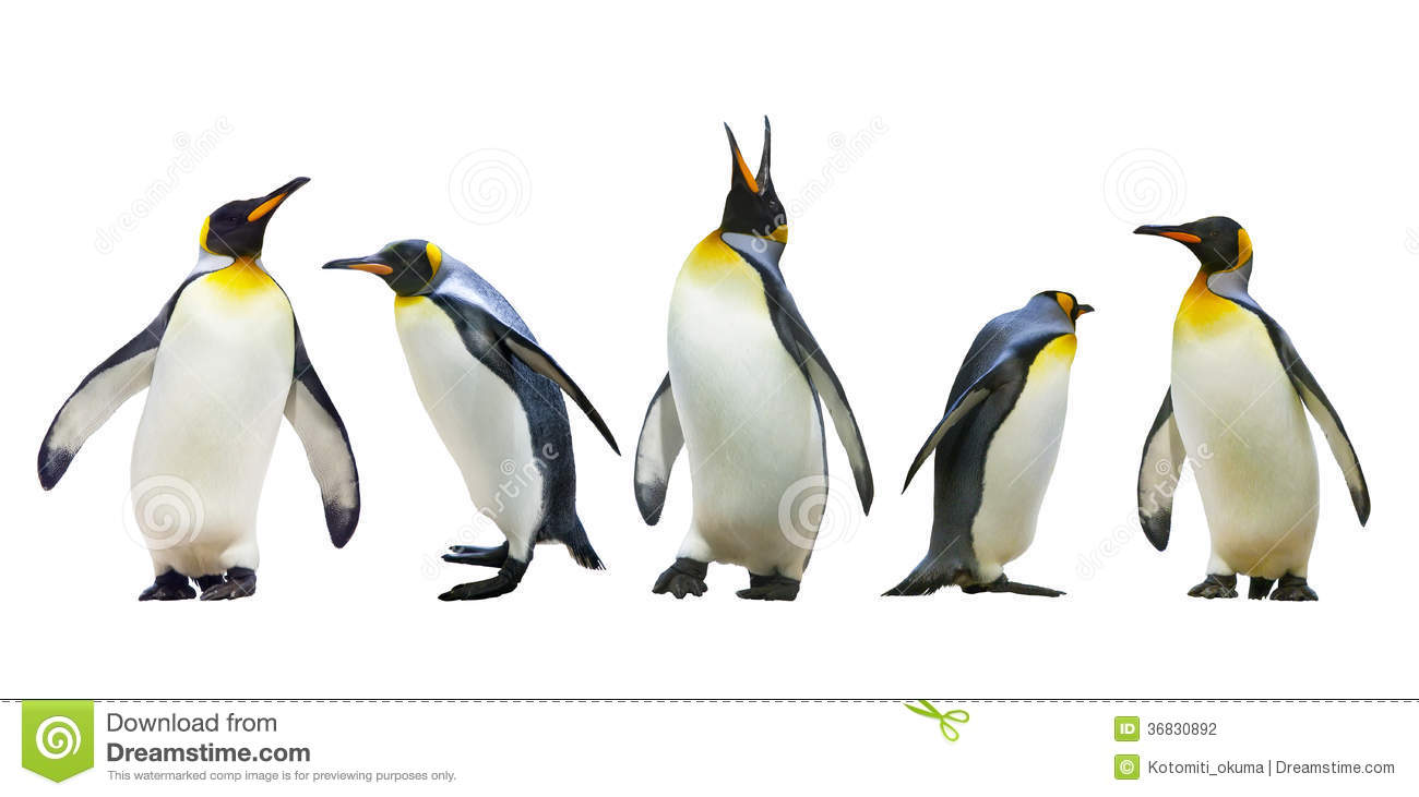 Pinguins de imperador
