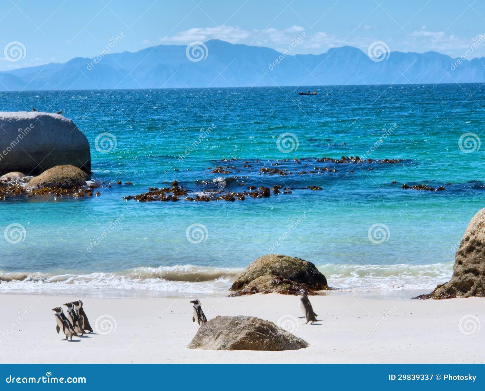 Pinguins na praia, montanhas no horizonte