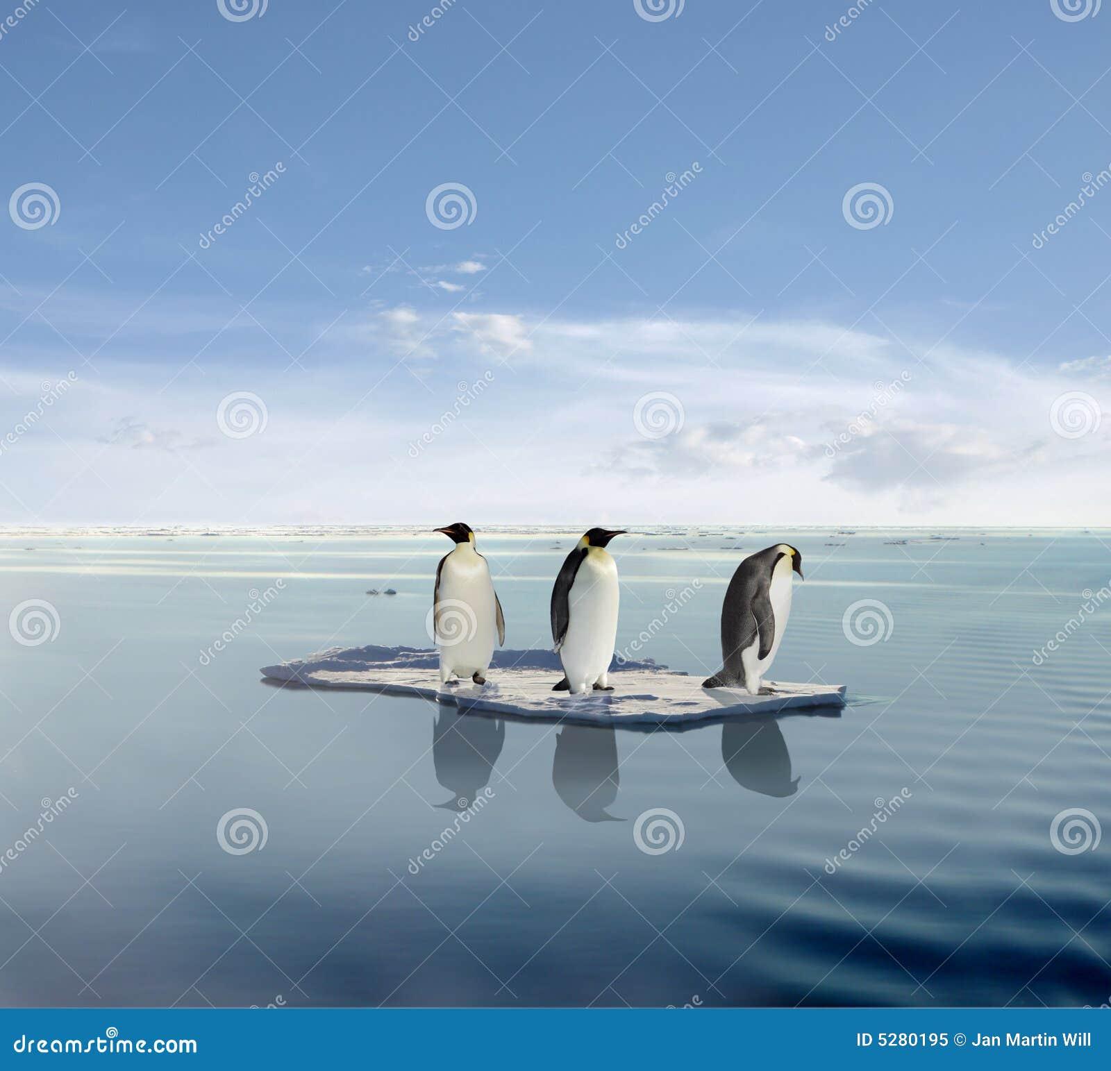 Pinguins no iceberg de derretimento