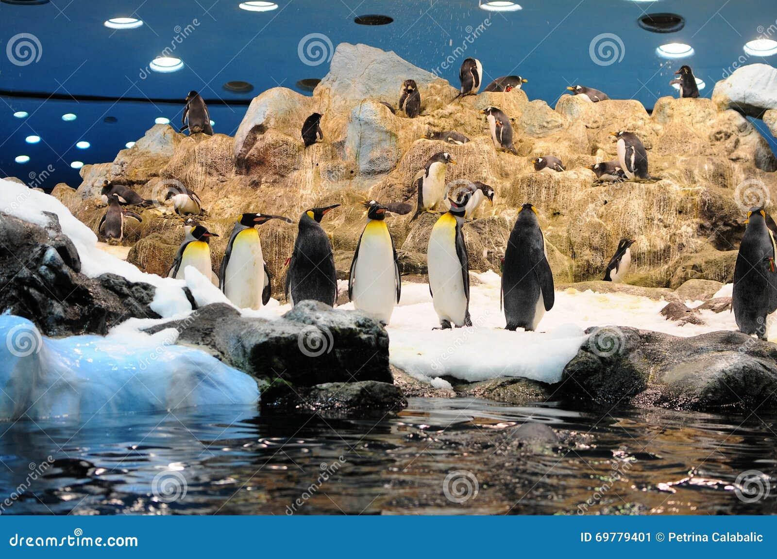 Pinguins no parque de Loro